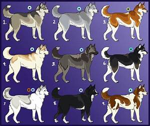 Siberian Husky Imports 01: CLOSED by Sedillo-Kennels on ...