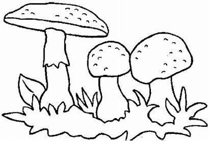 Pilze Colorare Champignons Paddestoelen Kleurplaten Gras Funghi