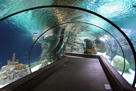 nebraska zoo underwater tunnel henry tunnels doorly shark ne way onlyinyourstate
