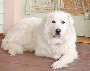 Big Fluffy Dogs Breeds - Dog Breeds