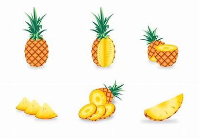 Ananas Pineapple Vector Clipart Graphics Vecteezy Vectors