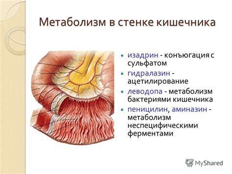 Ацетилсалициловая кислота таблетки: инструкция по..