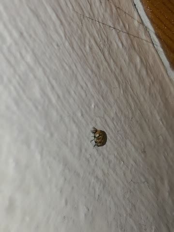 bettwanzen oder doch etwas anderes insekten bett zu