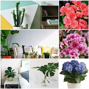 These Houseplants Are Shady And Easy To Clean – Fresh ...