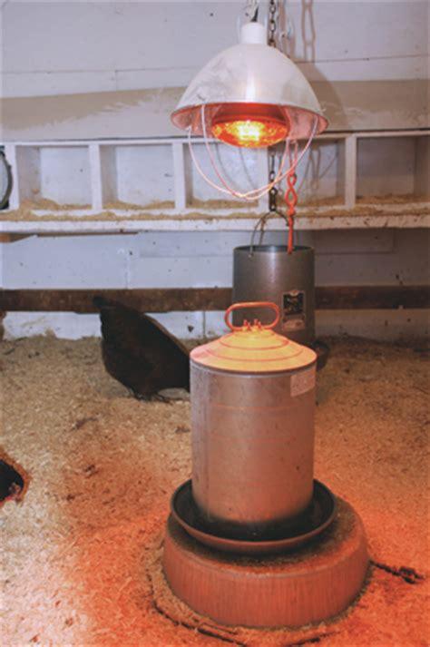 winterizing your chicken coop pasturas los alazanes