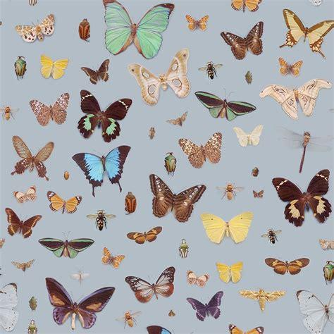 bugs  butterflies wallpaper ella doran