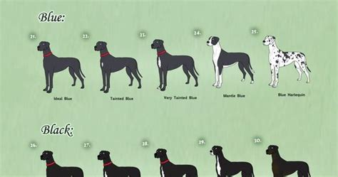 great dane color chart great dane coat colors adoptables closed by anellyz