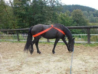 Ems Pferd Training