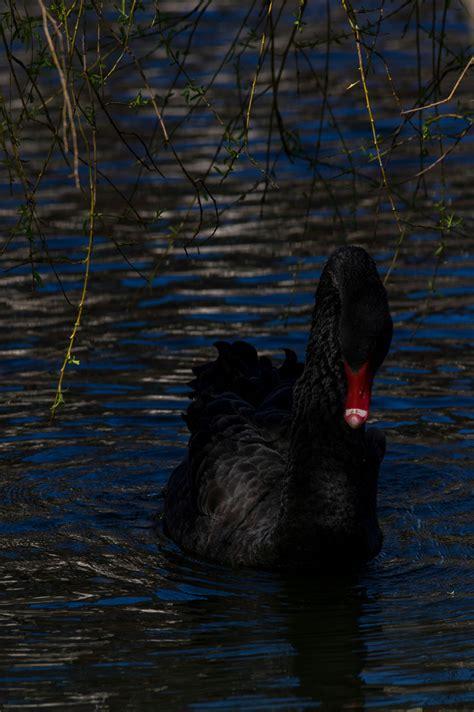 schwarze schoenheit foto bild experimente tiere