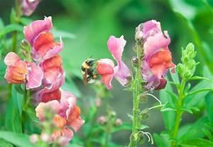 Welche Blumen Für Bienen : bunte balkonbepflanzung f r bl tenbesuchende insekten mellifera e v ~ Eleganceandgraceweddings.com Haus und Dekorationen