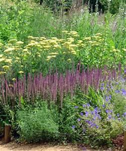 Graminées Vivaces Hautes : tendance 14 recettes pour un jardin naturaliste gamm vert ~ Premium-room.com Idées de Décoration