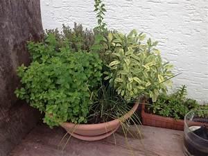 Kräuter Pflanzen Topf : umpflanzen von kleinen topfpflanzen native plants gartenblog ~ Lizthompson.info Haus und Dekorationen