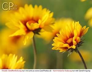 Aktuelle Blumen Im April : fotos motive juni 2016 ~ Markanthonyermac.com Haus und Dekorationen