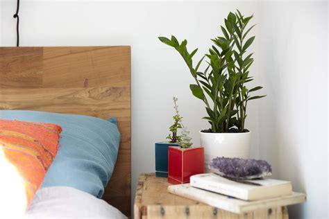 Should You Keep Plants In Your Bedroom?  Casper Blog