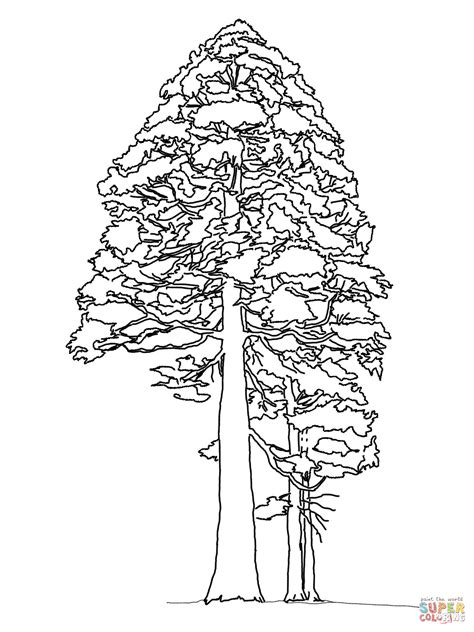 Free Coloring Pages Of California State Tree