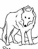 Wolf Coloring Snow Pages Arctic Clipart Animals Print Clipartmag Colornimbus sketch template