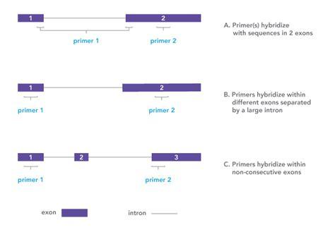 qpcr primer design use splice junctions to your advantage in qpcr