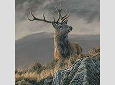 Wildlife art wildlife paintings by artist Martin Ridley