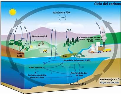 Cycle Carbon Diagram Espanol Svg Basic Pixels