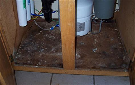 black mold kitchen sink how to get rid of black mold kitchen sink or in cabinets 7894