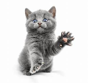 Weißer Wurm Katze : fotos von tiere k tzchen katze grau pfote lustige starren wei er ~ Markanthonyermac.com Haus und Dekorationen