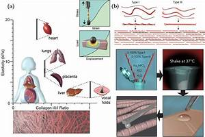 A  Elasticity Of Various Soft Tissues In The Human Body
