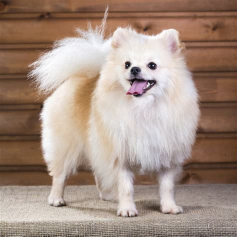 20 small breeds that are beyond page 2