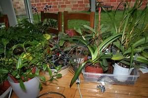 Arrosage Automatique Interieur : arrosage automatique special vacances pour plantes d 39 interieur ~ Melissatoandfro.com Idées de Décoration