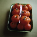 Genetically Modified Tomatoes Photograph by Cristina ...