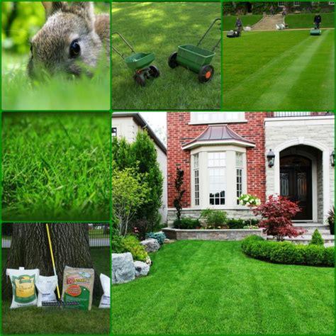 Wie Pflege Ich Meinen Rasen by Rasen Richtig D 252 Ngen N 252 Tzliche Tipps Zur Rasenpflege