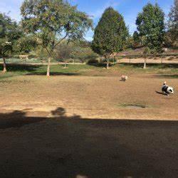 Montiel Dog Park - 27 Photos & 30 Reviews - Dog Parks ...