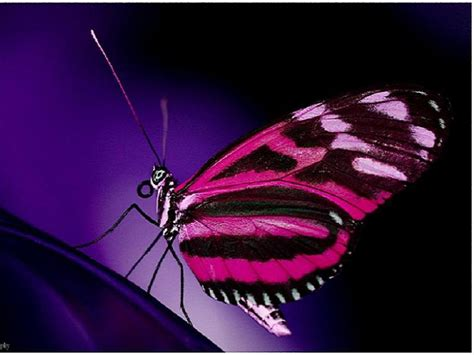 Animated Butterfly Wallpaper - animated butterfly wallpaper animal