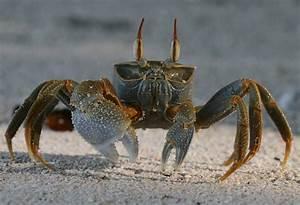 Crustáceos Mundo Oceánico