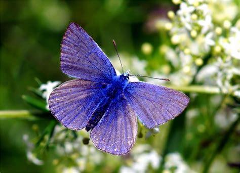 Blau Foto & Bild   tiere, wildlife, schmetterlinge Bilder ...