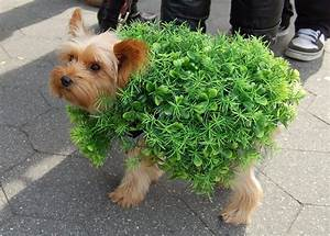 8 easy and adorable costumes for dogs vetbabble