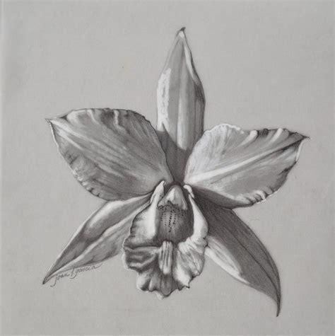 how to draw a cattleya flower cattleya ii iwanagara drawing by joan garcia