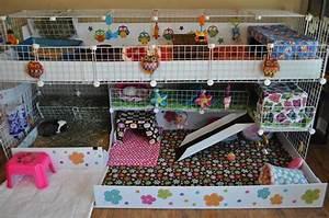 Cage A Cochon D Inde : construire une cavy cage le cochon d 39 inde ~ Dallasstarsshop.com Idées de Décoration