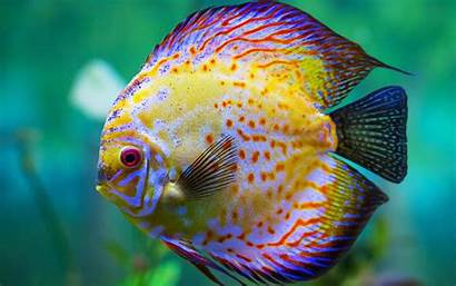 Fish Sea Yellow Wallpapers13 Resolution