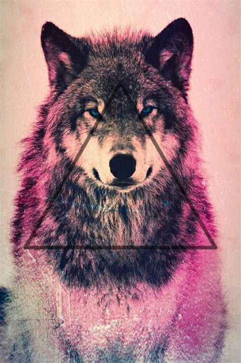 hipster wolf wallpaper wallpapersafari