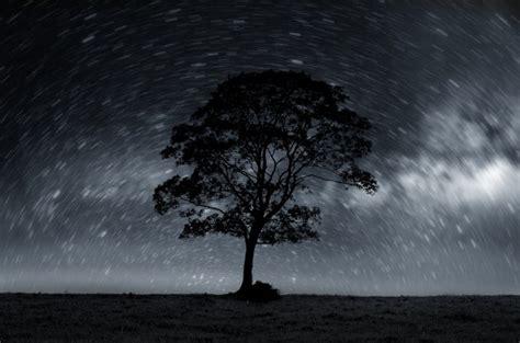 night sky  lonely tree  stock photo public