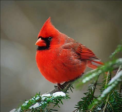 cardinals thewiseacres