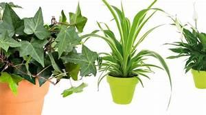 Plante Verte D Appartement : les 25 meilleures id es concernant plantes d polluantes ~ Premium-room.com Idées de Décoration