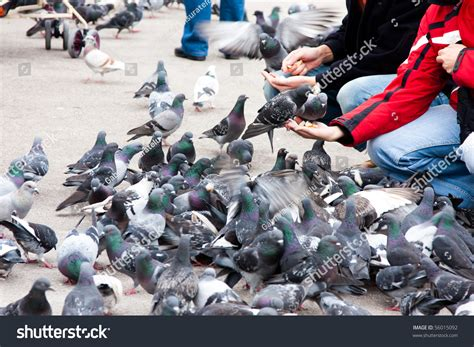 people feeding pigeons with bread in a park stock photo