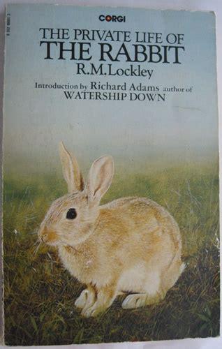 private life   rabbit wikifur  furry