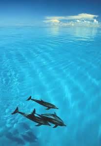 Clear Crystal Dolphins