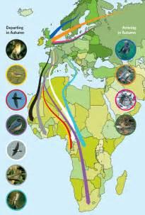 Bird Migration Map