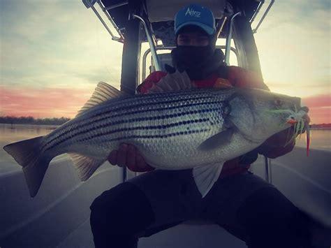 Maryland's Chesapeake Bay Striped Bass Season Opens April