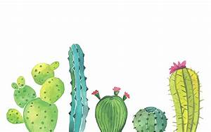 cactus background tumblr 6 | Background Check All