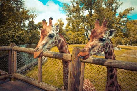 zoo tours virtual chester edinburgh cams animal streams these scotsman