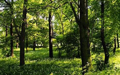 Trees Background Nature Plants Widescreen Wallpapersafari Forever